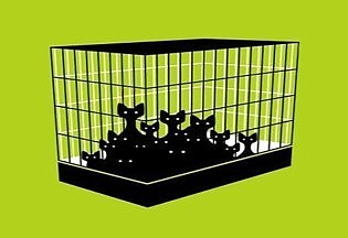 01 cats in a cage sharper 45